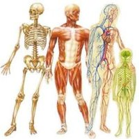 Donne cours d'anatomie-physiologie